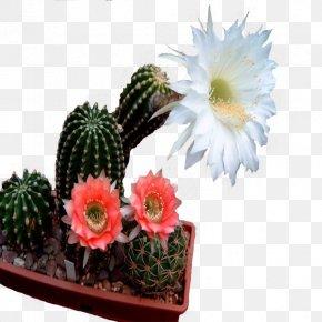 Flower - Flower Garden Houseplant Blossom Flowerpot PNG