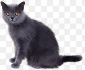Cat - Persian Cat Norwegian Forest Cat Traditional Persian Siamese Cat Kitten PNG