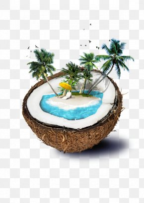 Coconut - Fiji Coconut Water Beach Island PNG