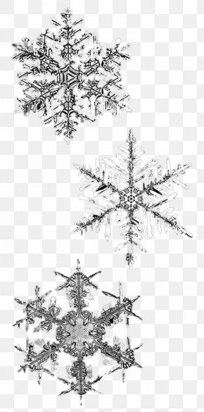 Snowflake - Snowflake Winter PNG