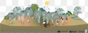 Pal Trees - Wetland Swamp Melaleuca Ericifolia Eucalyptus Robusta Habitat PNG