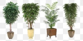 Green Potted Plant Evergreen Trees Class - Tree Flowerpot Houseplant PNG