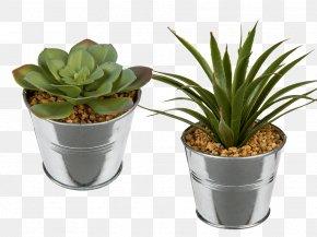 Succulent Plant Flowerpot Ceramic Glass PNG