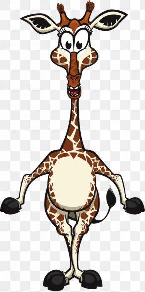 Tr - Cartoon Northern Giraffe Animal PNG