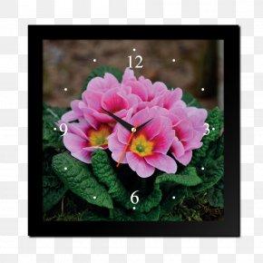Hoa Sen - Primrose Cowslip Flower Herb Plant PNG