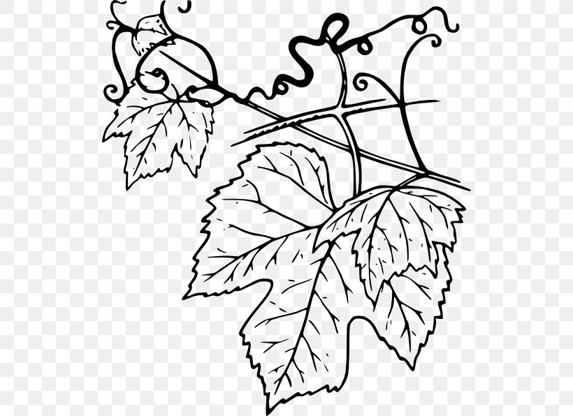 Common Grape Vine Grape Leaves Clip Art Png 528x596px Common Grape Vine Black And White Branch