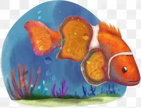 Clown Fish - Desktop Wallpaper Image Clownfish PNG