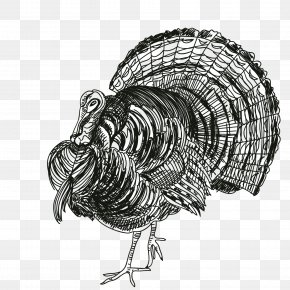 Thanksgiving Turkey - Turkey Thanksgiving Black And White Rooster PNG