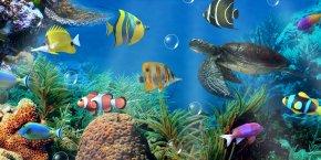 Aquarium - Aquarium Android Desktop Wallpaper Aptoide Wallpaper PNG