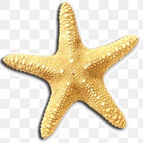 Starfish - Hartenbos Waterwurm Accommodation Starfish Invertebrate Swimming Pool PNG