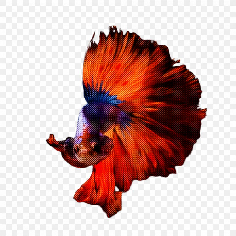 Orange, PNG, 2000x2000px, Red, Costume, Orange Download Free