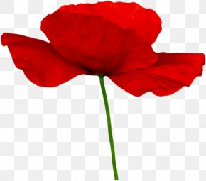 Memorial Day Poppy Clip Art Anzac - Clip Art Remembrance Poppy Desktop Wallpaper PNG