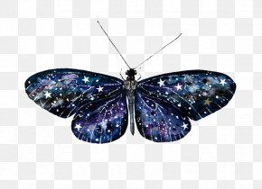 Sky Star Animal Butterfly - Artist Painting Drawing Illustration PNG