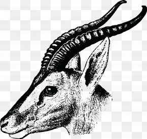 Gazelle - Gazelle Drawing Impala Clip Art PNG
