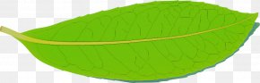Yellow Leaf - Green Leaf Yellow PNG