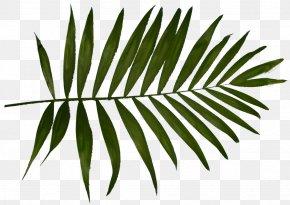 Blink Brow Bar Eyebrow Threading Tinting More - Arecaceae Hi Brow Beauty Bar Leaf White Plant Stem PNG
