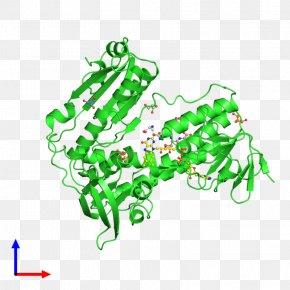 Leaf - Leaf Amphibian Line Clip Art PNG