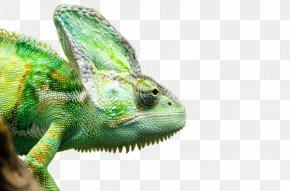 Iguana Transparent Picture - Lizard Reptile Chameleons Veiled Chameleon Snake PNG