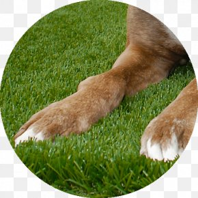 Lush Grass - Lawn Artificial Turf Garden Dog Breed Meadow PNG