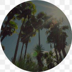 Los Angeles - Los Angeles San Francisco Travel Social Media CheapTickets PNG