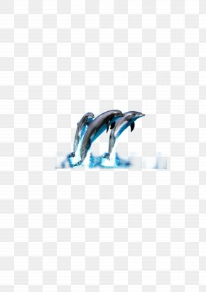 Dolphin - Dolphin Wallpaper PNG