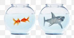 Shark Goldfish Tank - Austria Germany Mein Recht Als Nachbar: Nachbarschaftsrecht In Xd6sterreich Law Book PNG