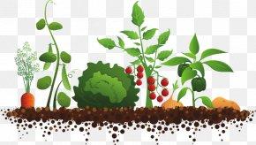 Fruit Garden Cliparts - Sensory Garden Community Gardening Clip Art PNG
