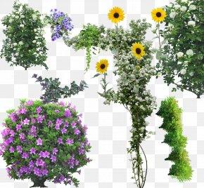 Tree - Tree Flower Shrub Arbor Day PNG