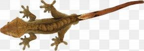 Lizard - Lizard Reptile Gekko PNG