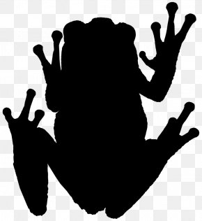 Frog - Tree Frog Amphibians Photography Silhouette PNG