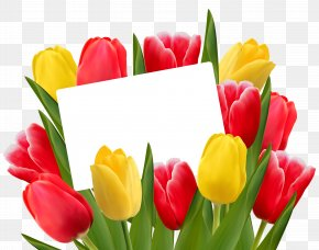 Transparent Red And Yellow Tulips Decoration PNG Clipart Picture - Tulip Flower Valentine's Day Stock Photography PNG