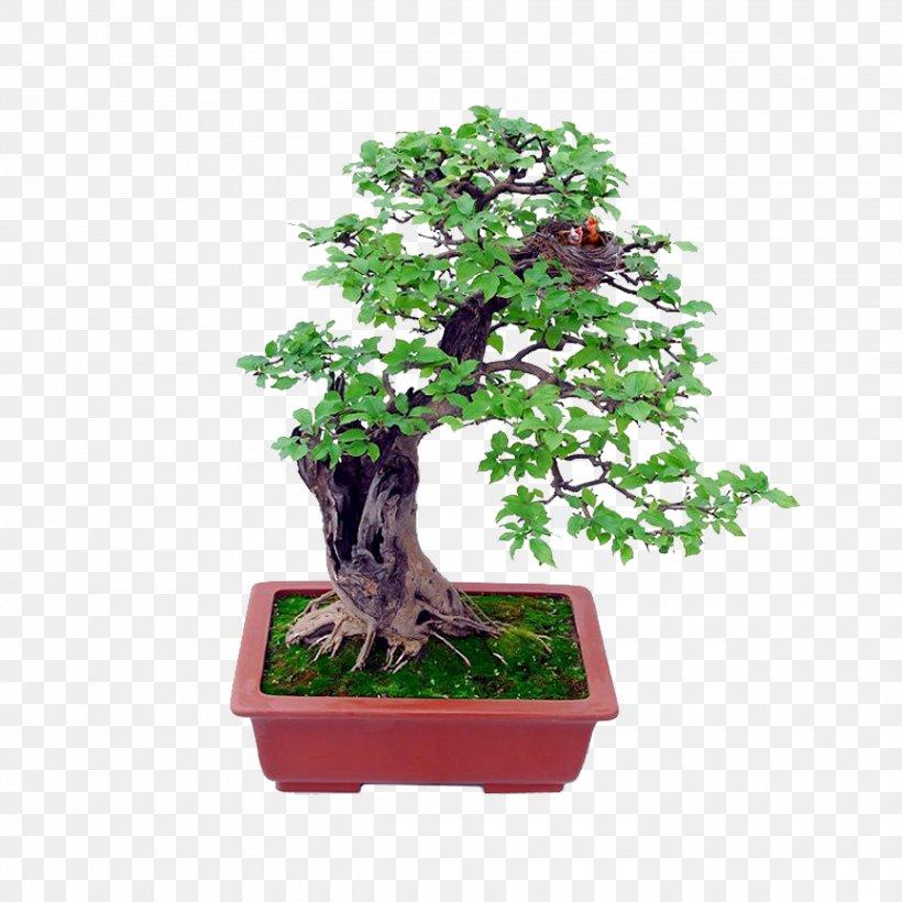 Bonsai Basics Beginning Bonsai The Gentle Art Of Miniature Tree Growing Indoor Bonsai Png 2480x2480px Bonsai