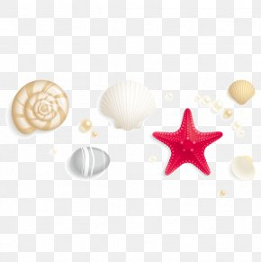 Shells And Starfish - Seashell Stock Photography Royalty-free Clip Art PNG