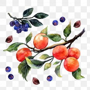 Watercolor Oranges And Blueberries - Apple Watercolor Painting Illustrator Illustration PNG