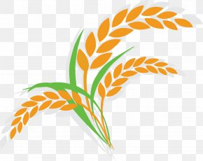 Cartoon Rice Icon - Oat Wheat Shutterstock Illustration PNG