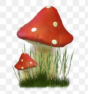 Mushroom - Fungus Mushroom Herbaceous Plant Clip Art PNG
