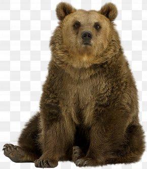 Polar Bear - Brown Bear American Black Bear Polar Bear Grizzly Bear PNG