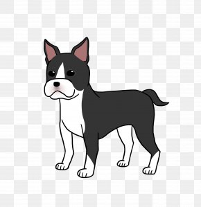 Puppy - Boston Terrier Puppy Dog Breed Whiskers Non-sporting Group PNG