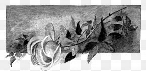 Flowers Shading - Drawing Visual Arts Painting Sketch PNG