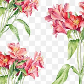 Red Flowers Background - Watercolor Painting Drawing Illustration PNG