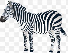Zebra Clip Art - Zebra Clip Art PNG