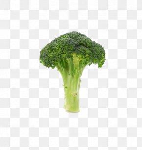 Broccoli - Broccoli Vegetable Icon PNG