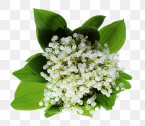 Lily Of The Valley - Lily Of The Valley 1 May Haute-Savoie PNG