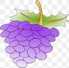 Anonymous - Common Grape Vine Wine Grape Leaves Clip Art PNG