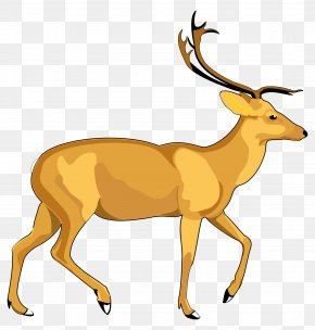 Deer Vector - Deer PNG