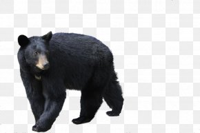 Black Bear Image - Brown Bear Polar Bear Florida Black Bear PNG