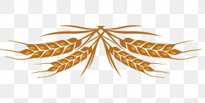 Wheat Color Design Vector Material - Wheat Beer Lager Helles Pilsner PNG