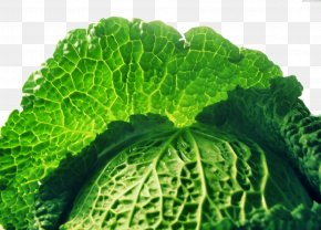 Cabbage - Savoy Cabbage Collard Greens Food Spring Greens PNG