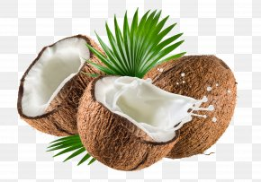 Coconut - Coconut Milk Coconut Water Nata De Coco Coconut Oil PNG