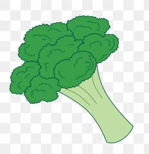Broccoli Cliparts - Broccoli Slaw Vegetable Clip Art PNG